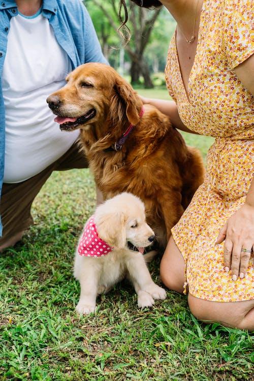 Kostnadsfri bild av avslappning, bindningstid, brun hund