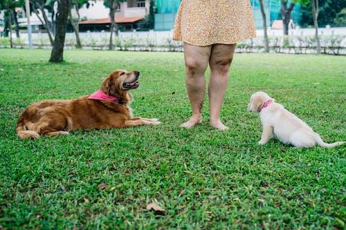 Kostnadsfri bild av bindningstid, brun hund, familj
