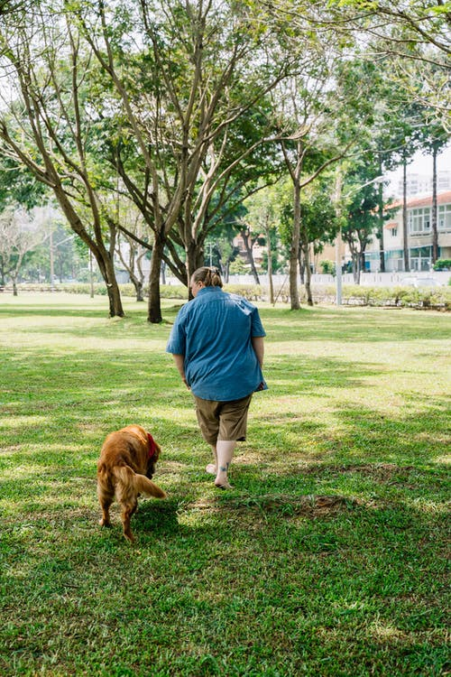 Kostnadsfri bild av barfotad, bindningstid, brun hund