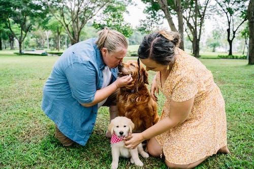 Imagine de stoc gratuită din câine brun, caine mare, câmp de iarbă