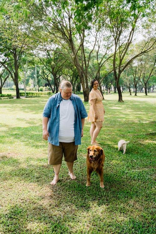 Kostnadsfri bild av bindningstid, brun hund, förtjusande