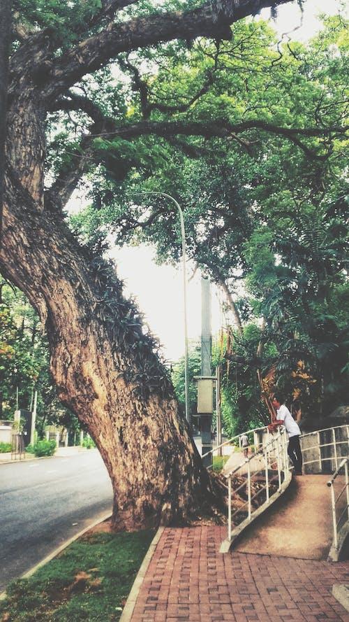 景觀, 樹 的 免費圖庫相片