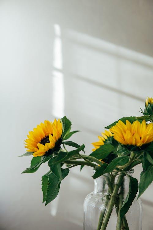 Fresh flowers in glass jar at sunlight