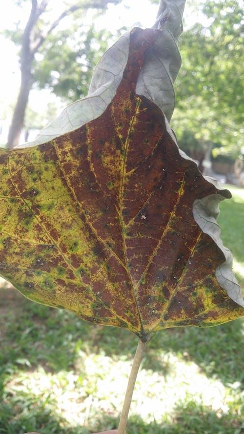 Kostnadsfri bild av torrt löv