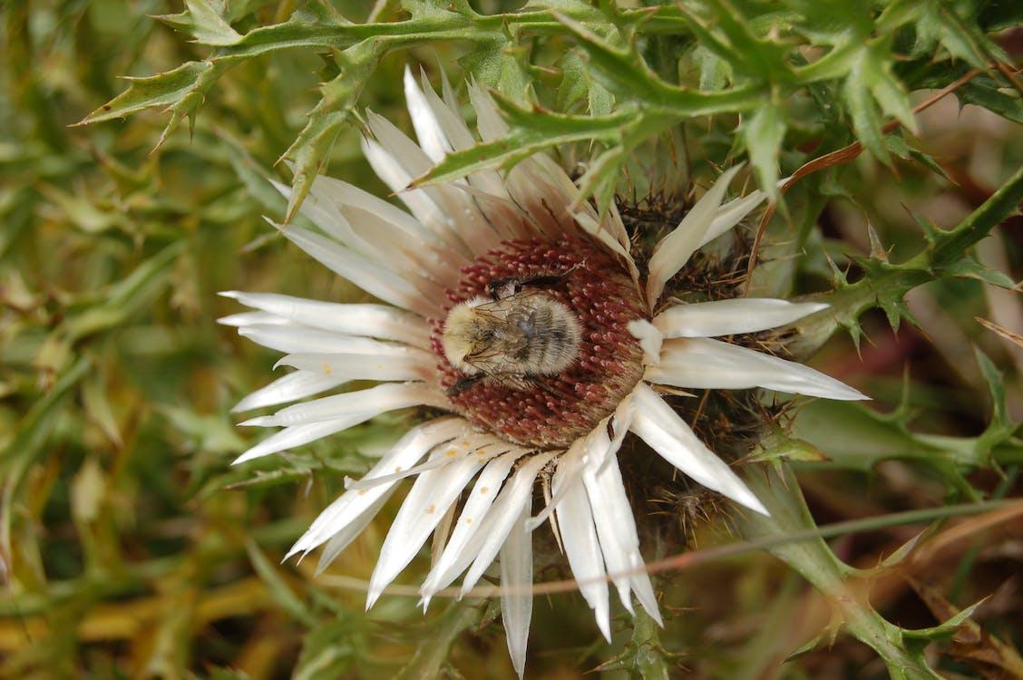flore, kvet