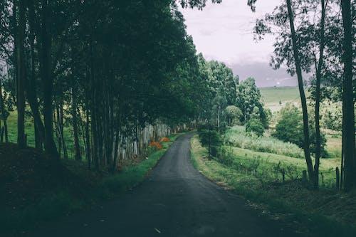 Základová fotografie zdarma na téma farma, hřiště, kopec, les