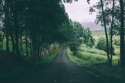 Free stock photo of road, forest, trees, countryside