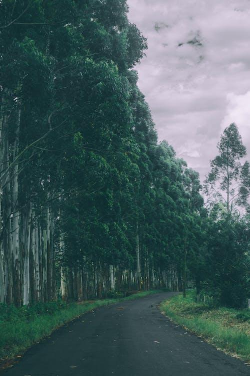 Photos gratuites de arbres, chemin, forêt, route