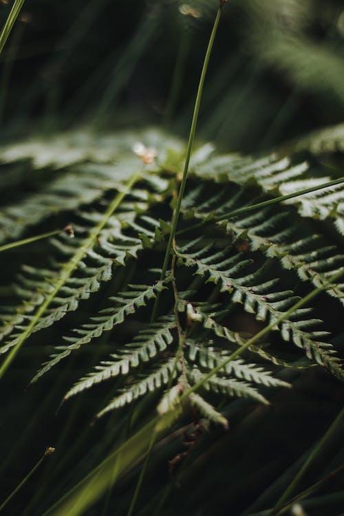 Foto stok gratis abadi, alam, alami