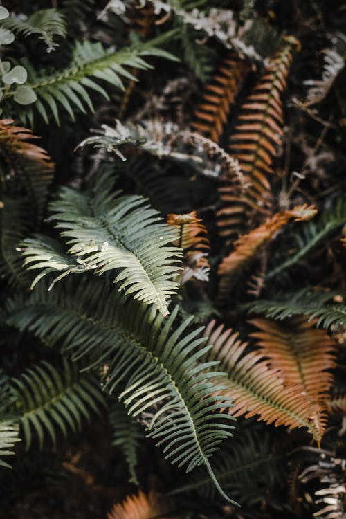 Green fern with fading leaves in forest
