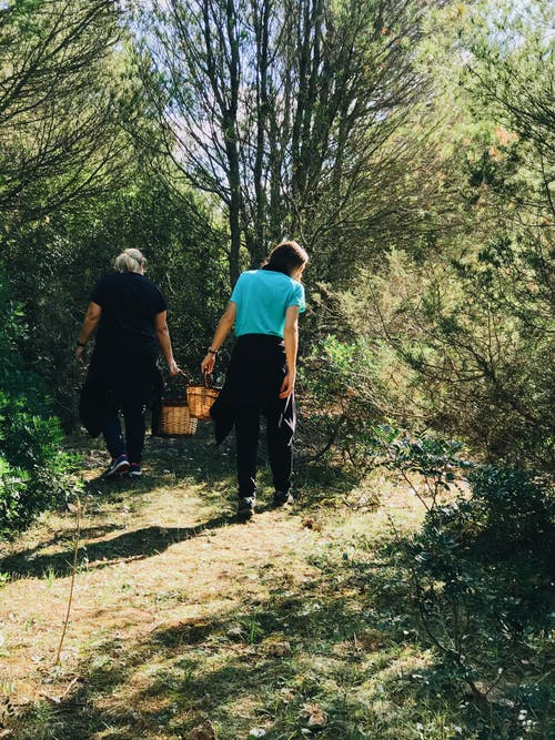 Back view full body of anonymous women with baskets strolling in woods with trees while picking ripe berries during harvesting season