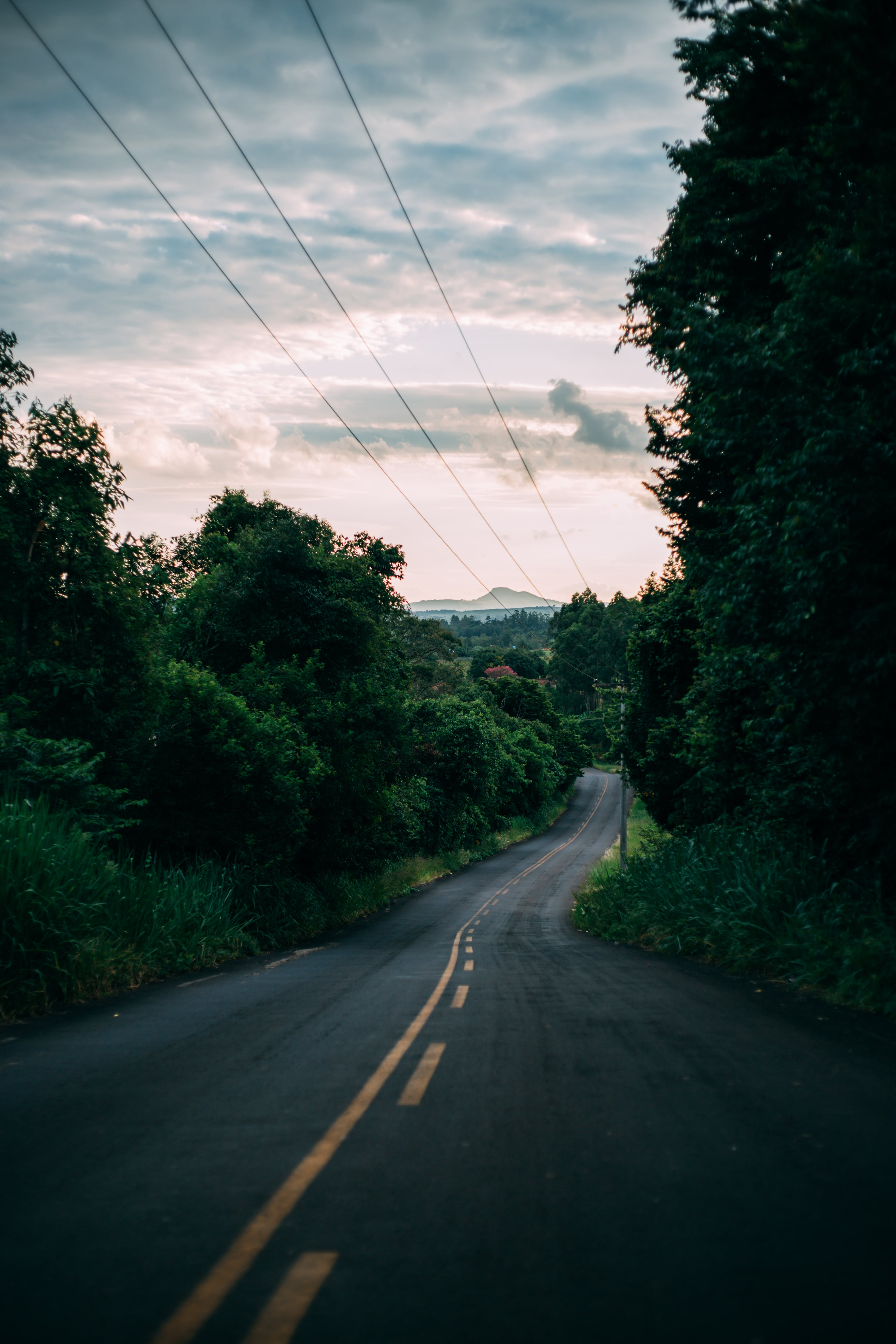 downhill, forest, power lines