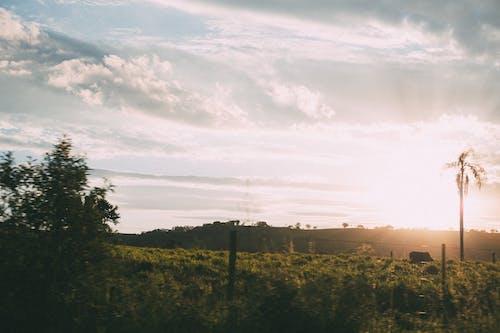 Imagine de stoc gratuită din apus, backlit, câmp, ceață