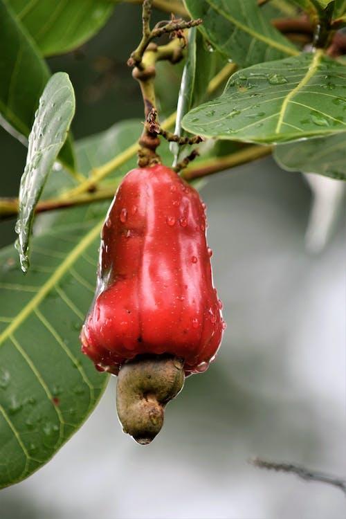 Red Fruit in Tilt Shift Lens