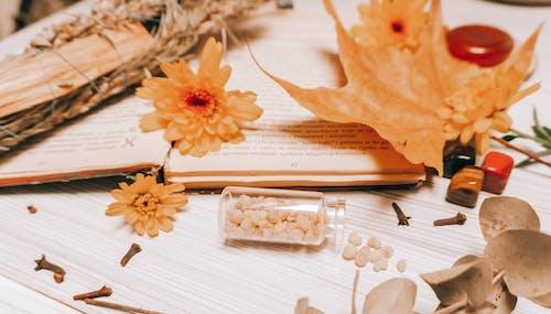 Orange Flower on White Book Page