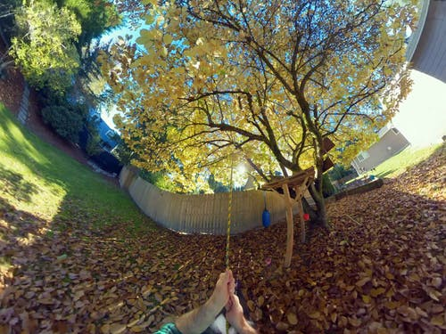 Free stock photo of fall, fall color, swing