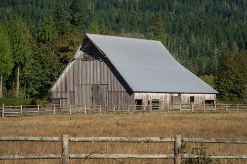 Fotos de stock gratuitas de agricultura, arboles, campo