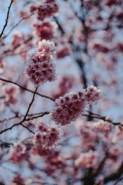 Ilmainen kuvapankkikuva tunnisteilla hanami, japani, jousi