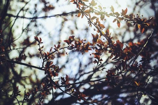 Lizenzfreie Bilder zu natur, äste, blätter, baum