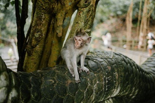 White Monkey on Tree Trunk