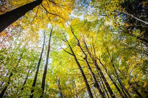 Ingyenes stockfotó erdő, esés, esik, fák témában