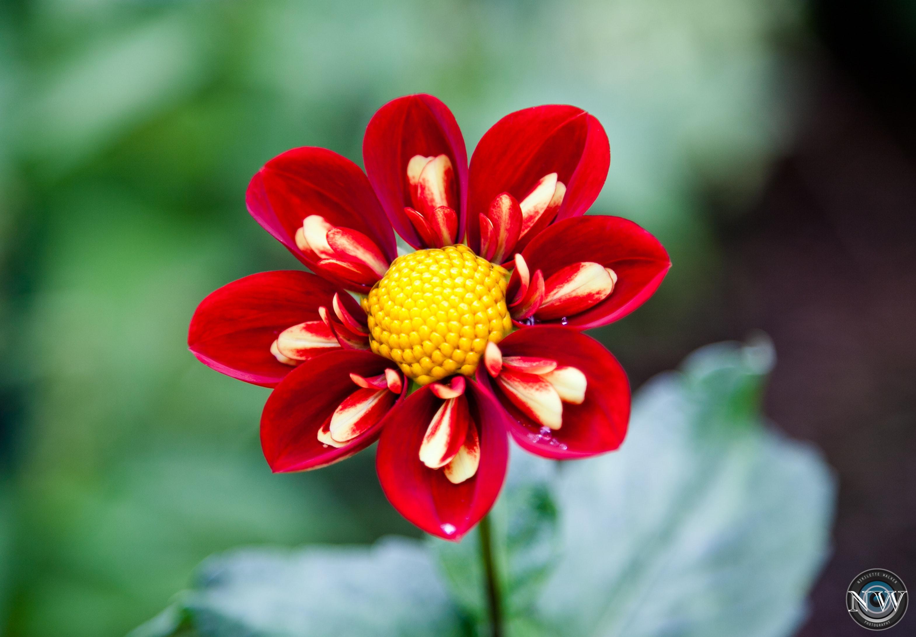 Free Stock Photo Of Beautiful Flowers Flower Flower Wallpaper
