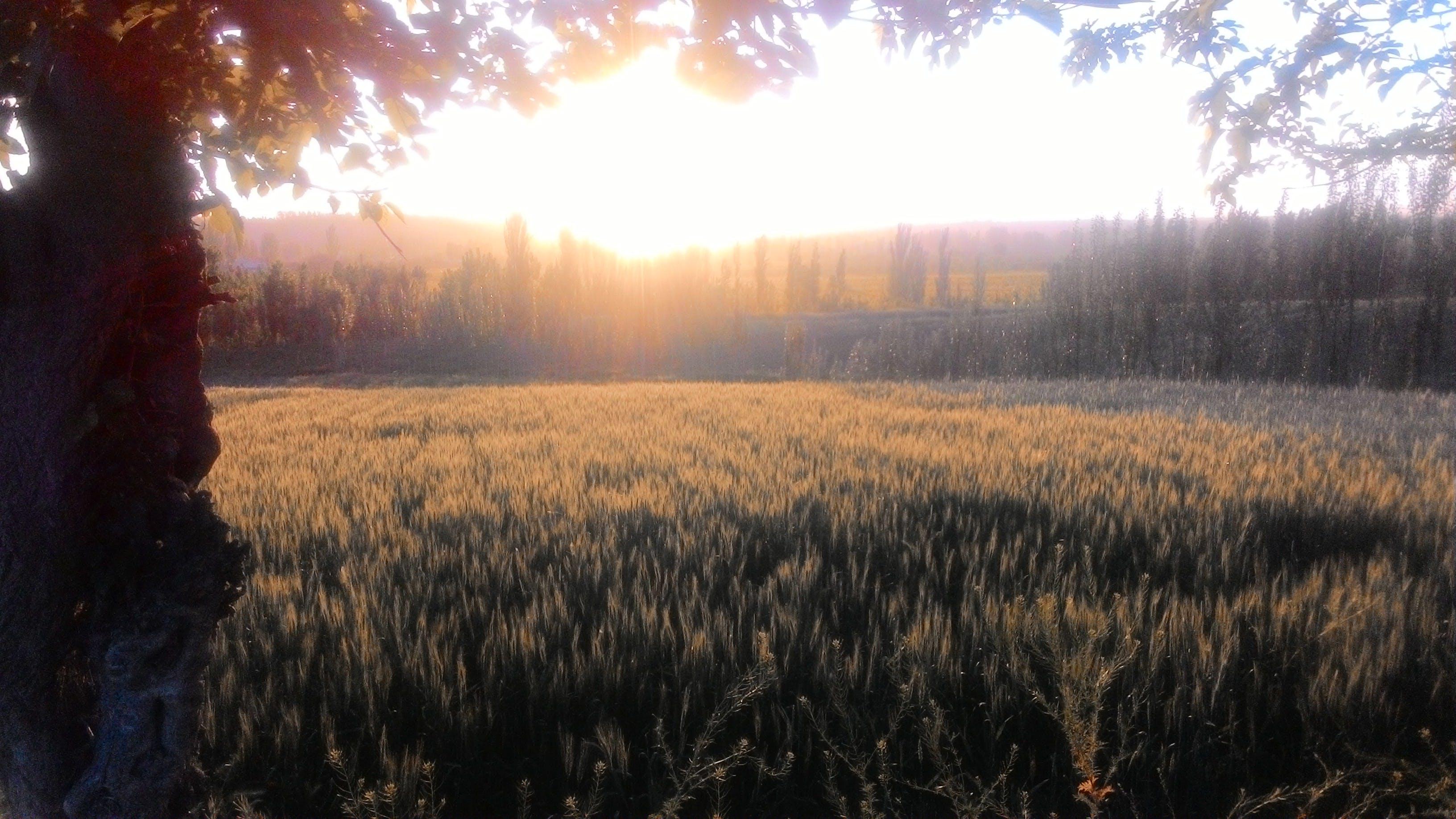 Free stock photo of evening sun, namangan, sun, sunset