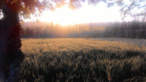 Free stock photo of evening sun, namangan, sun