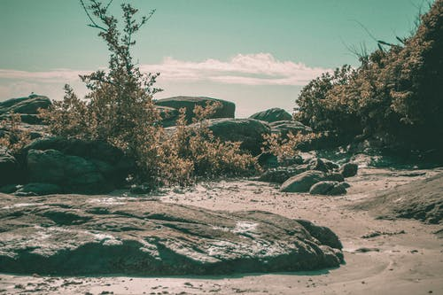 Free stock photo of beach, environment, rocks, sand beach