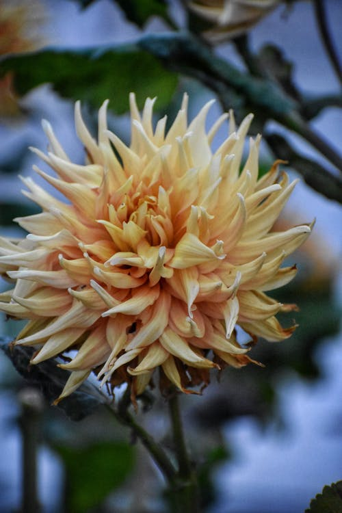 Fotobanka sbezplatnými fotkami na tému fotografia prírody, krásna príroda, krásny kvet, kvet