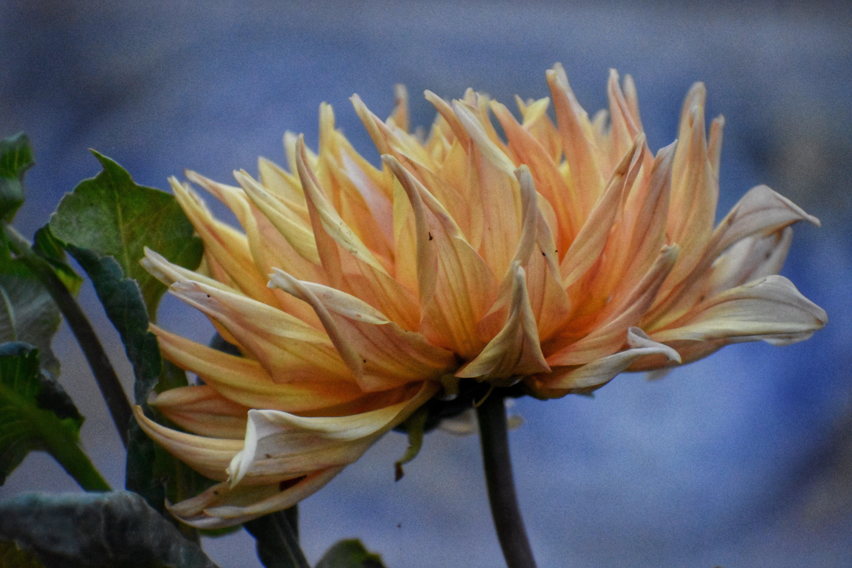 Free stock photo of beautiful flower, beautiful nature, flower, flower garden