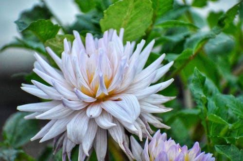 Photos gratuites de beauté de la nature, belle fleur, belle nature, blanc