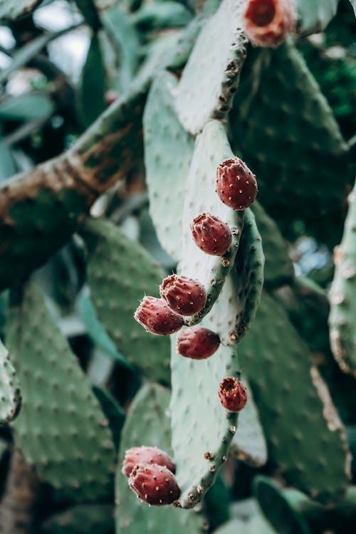 Close Up Shot of a Cactus Plant