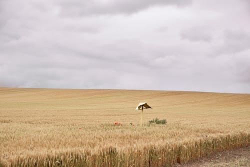 Kostenloses Stock Foto zu ackerland, atmosfera de outono, außerorts, autmn