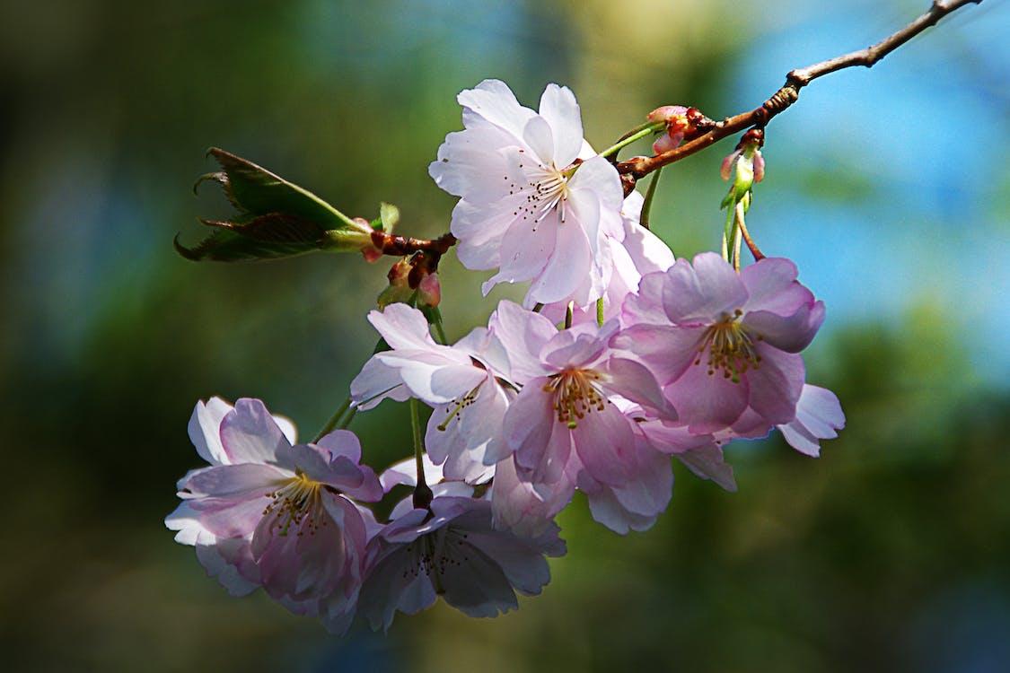 квіти, квітка, макрофотографія