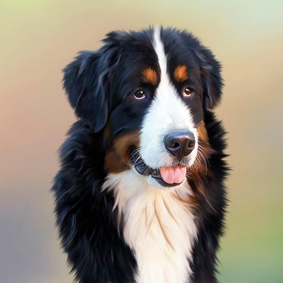 Black and White Long Coat Dog