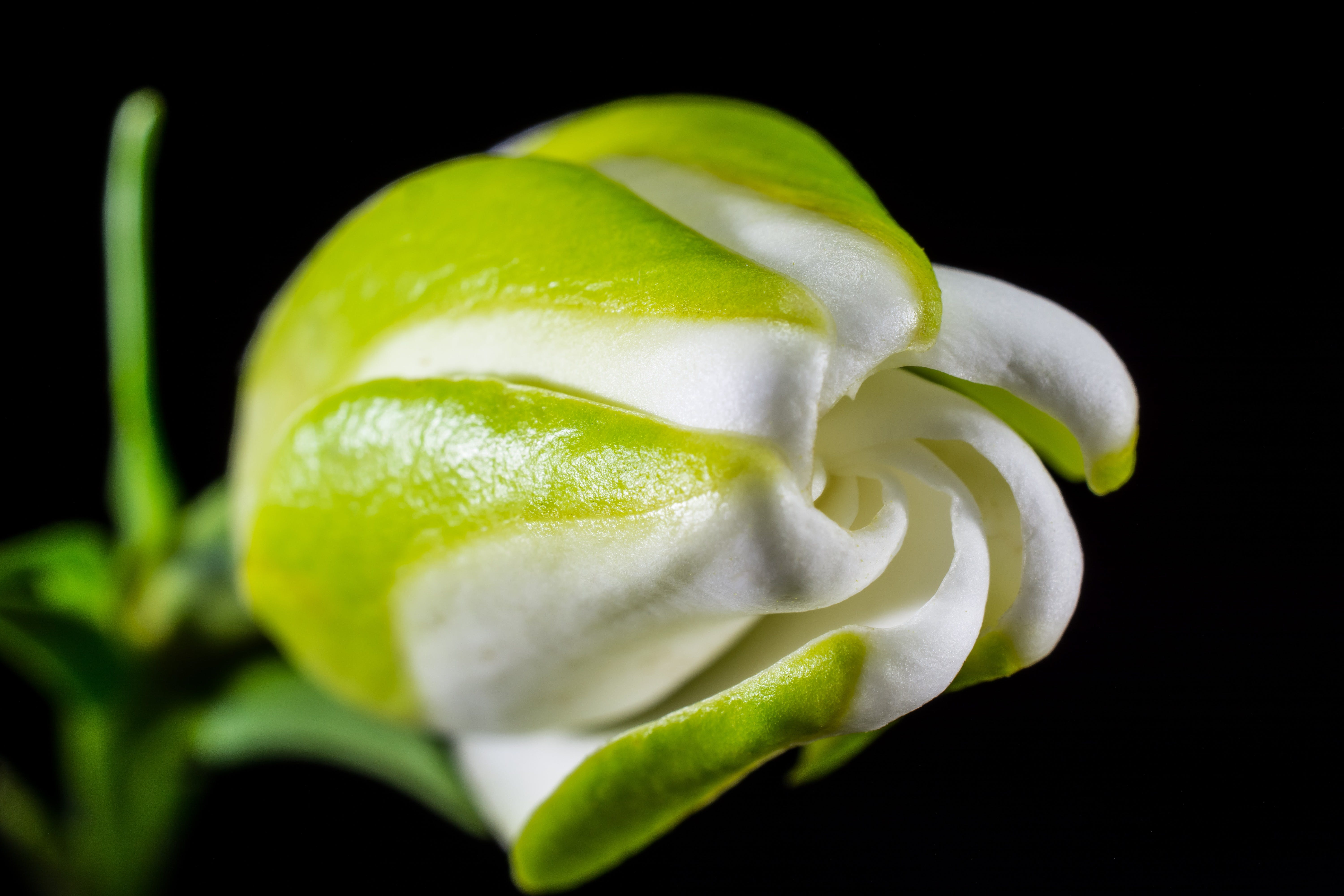 White and Green Petal Flower