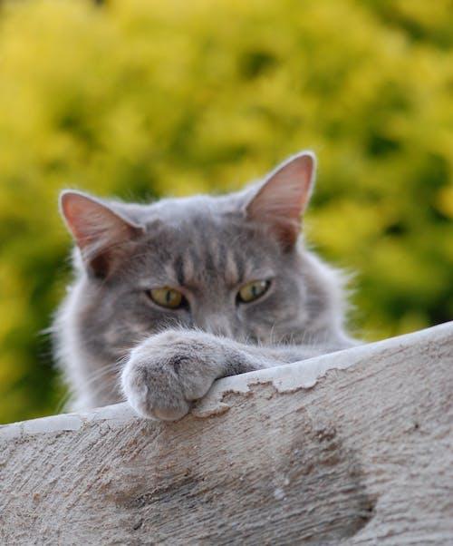 Gratis arkivbilde med dyr, katt, kattedyr, kjæledyr
