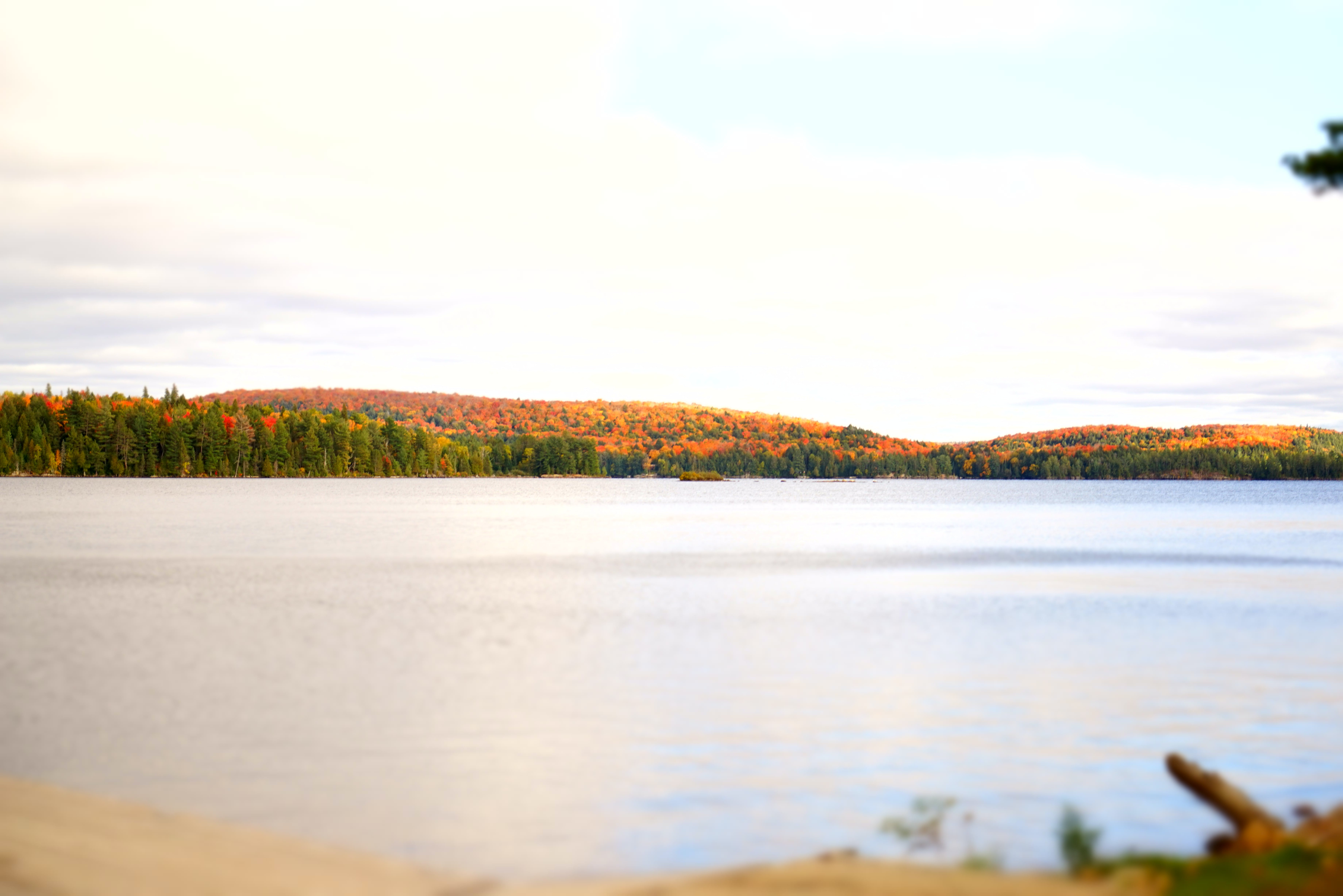 Lake Near Forest