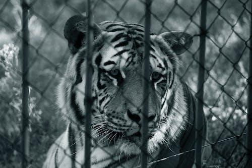 คลังภาพถ่ายฟรี ของ ป่า, สวนสัตว์, อิสรภาพ