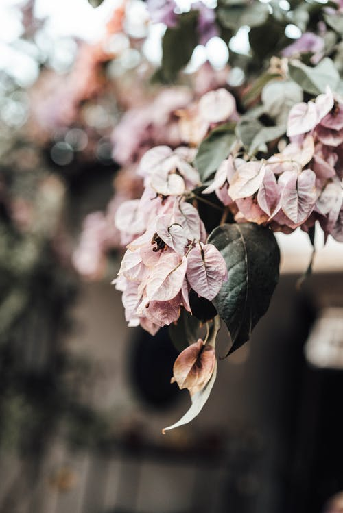 Blooming tree with pink petals in lush garden