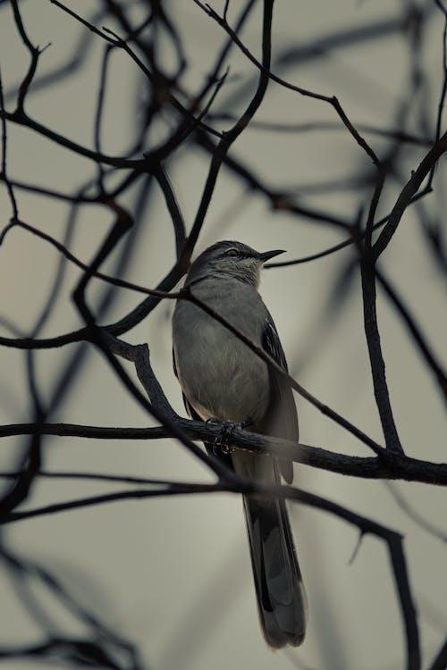Imagine de stoc gratuită din animal, arbore, aviar