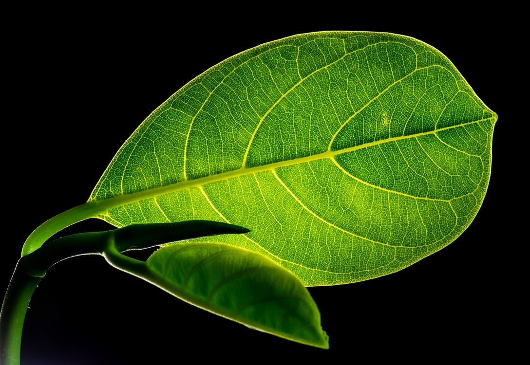 Green Flat Oblong Leaf Plant on Close Up Photography