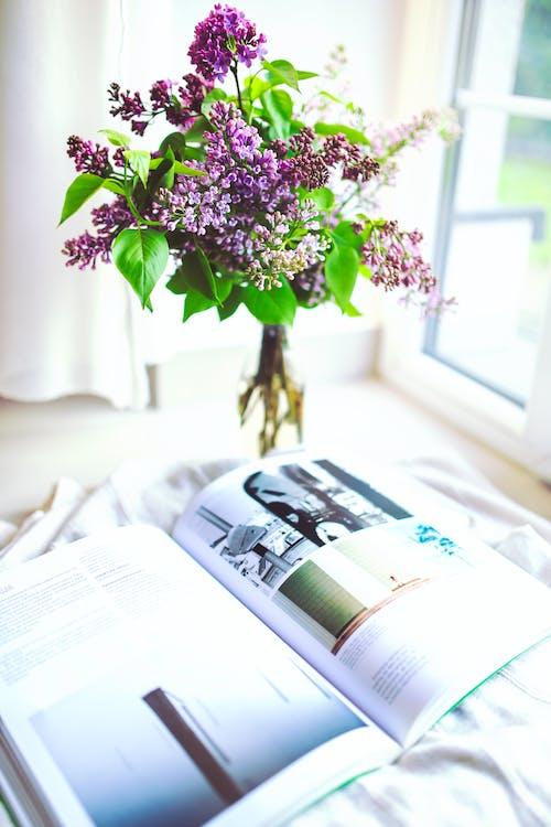 Kostnadsfri bild av äldre, blad, blomma, bok