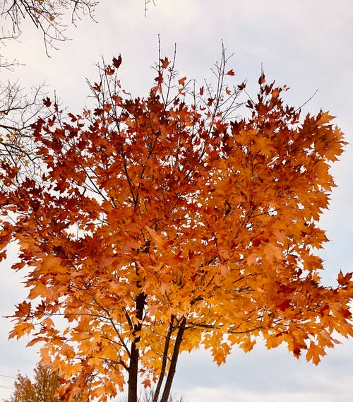 Free stock photo of fall leaves
