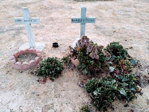 Free stock photo of Gravesgra