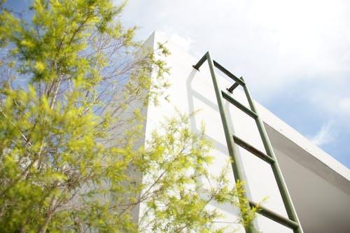 Green Leafed Tree Beside Ladder