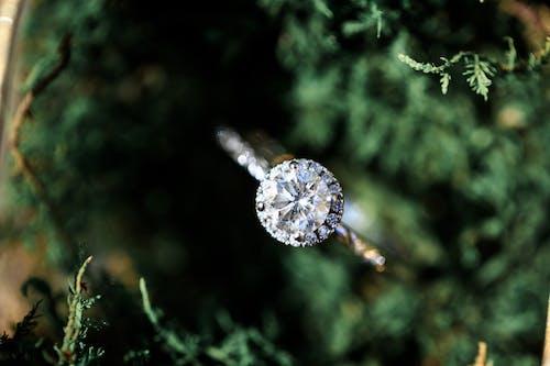 Photos gratuites de arbre, bague de fiançailles, bijoux, bois