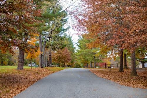 Free stock photo of autumn road, fall, fall colors