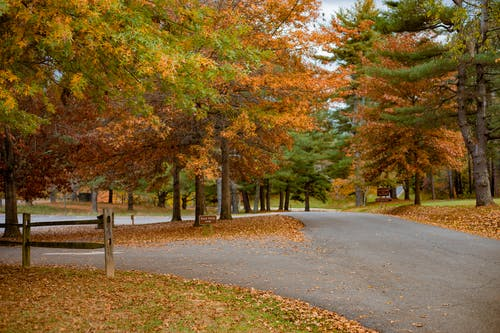 Photo Of Brown and Green Trees